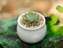 适合卧室养的植物推荐