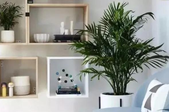 新房装修之后放什么绿植合适呢?